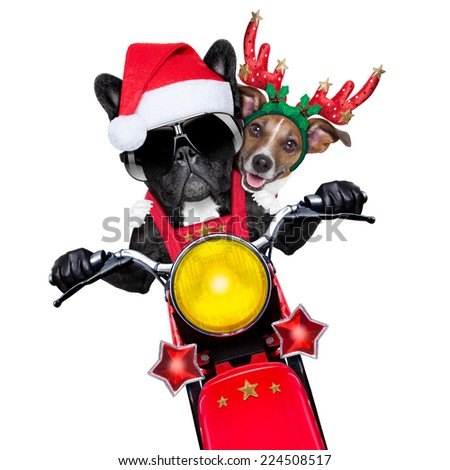 two christmas dogs on a motorbike riding with speed, isolated on white blank white background - stock photo