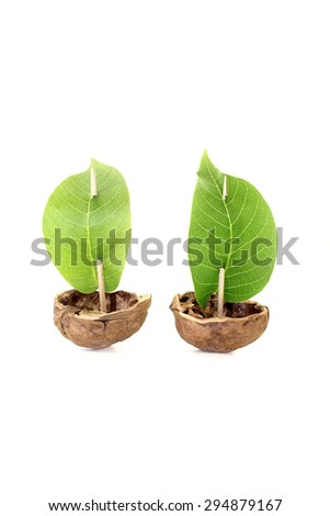 two cockleshell from a walnut shell with leaf sails on a bright background - stock photo