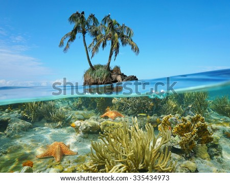 Two coconut trees with sea birds on an islet and split by waterline, corals with starfish underwater, Caribbean sea - stock photo