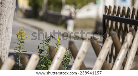Two colorful flowers surrounded by a nice wooden fence in the small town of Leutaischklamm, Germany. - stock photo