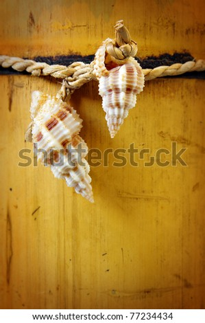 Two conchs on a bamboo cane background - stock photo