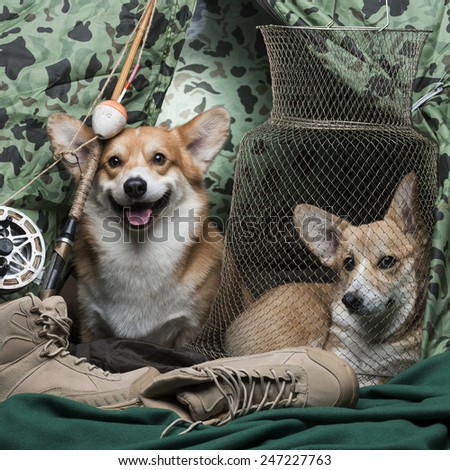 Two corgi dogs in a fisherman's tent - stock photo