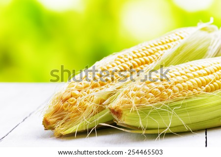 Two corn cobs on a garden table. - stock photo