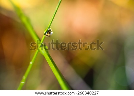 two crossed blades of grass with a water droplet and a colorful background - stock photo