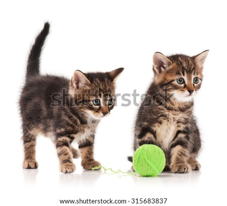 Two curious cute kittens isolated on white background cutout - stock photo