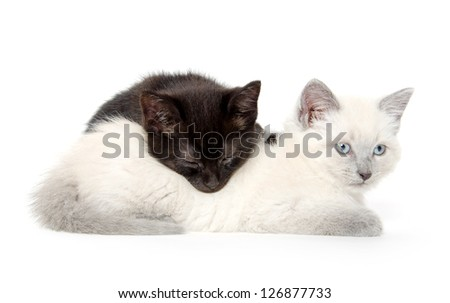 Two cute baby kittens resting on white background. One cat is sleeping on the other. - stock photo