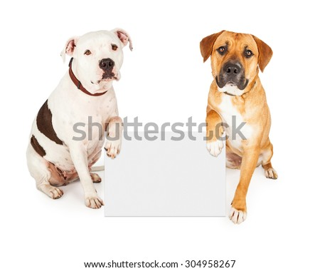 Two cute large breed dogs holding a blank white sign to enter your text onto - stock photo
