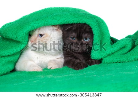 Two cute little kittens  peeking out from under the soft warm green blanket - stock photo