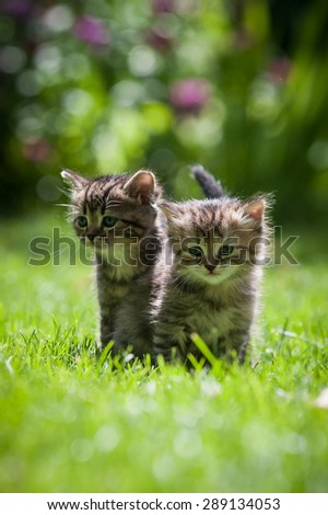 Two cute little kittens sitting in green grass  - stock photo