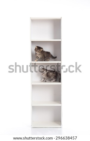 Two cute tabby kitten playing on white wooden shelf,white background isolated - stock photo
