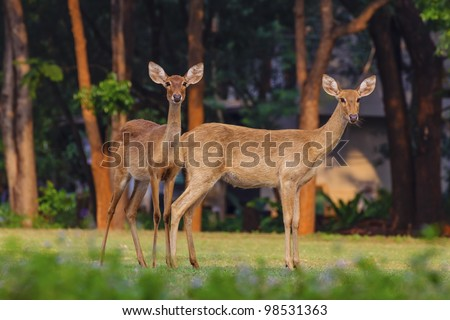 Two deer. - stock photo
