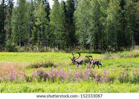 Two deer in the woods in summer - stock photo