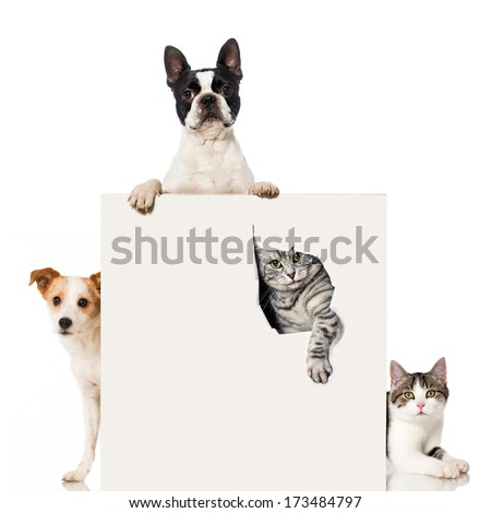 Two dogs and two cats - stock photo