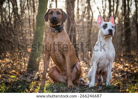 two dogs at the forest with the sun behind - stock photo