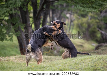 Two dogs fighting in park - stock photo