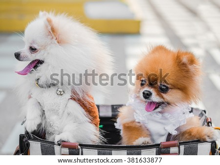 Two dogs in a bag. - stock photo