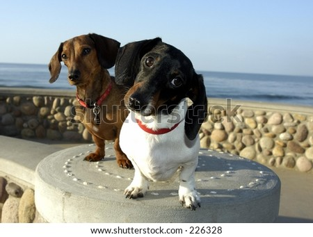 Two dogs looking at camera - stock photo
