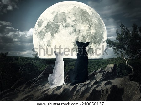two dogs looking at the moon - stock photo