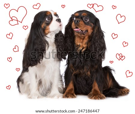 two dogs on white with drawn hearts around them - stock photo