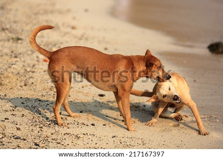 Two dogs playing on a beach in the sunlight. - stock photo