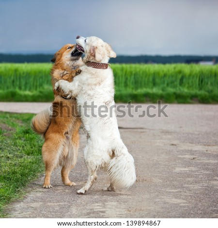 two dogs standing and hugging each other - stock photo
