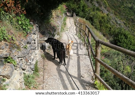 Two dogs walking on Cinque Terre trail - stock photo