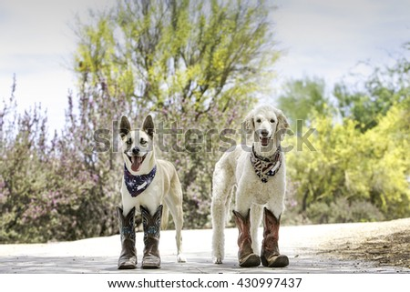 Two dogs wearing cowboy boots and patriotic bandanas - stock photo