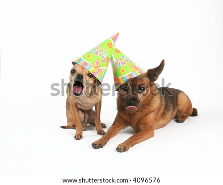 two dogs with birthday hats on their heads - stock photo
