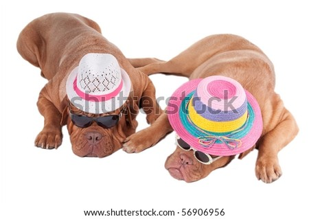 Two dogs with summer hats and sunglasses ready for holiday - stock photo