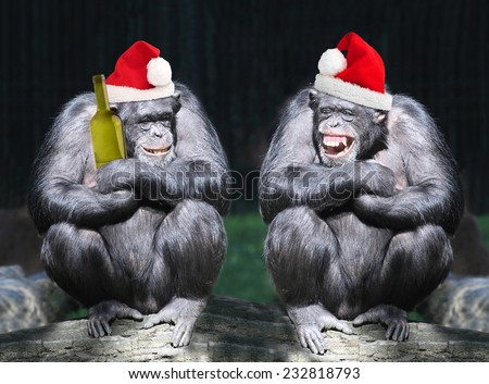 Two drunken chimpanzees have a fun on christmas party.  - stock photo