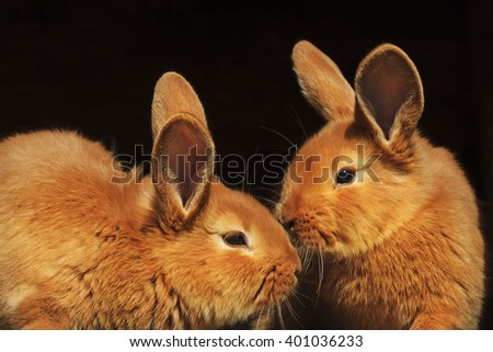 Two Easter bunnies on a black background, isolated - stock photo