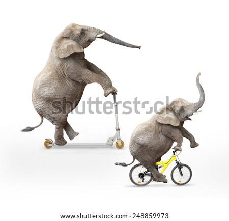 Two  elephant's friends having a fun. - stock photo