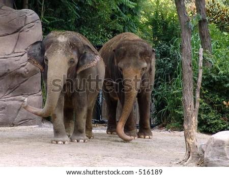 Two Elephants - stock photo