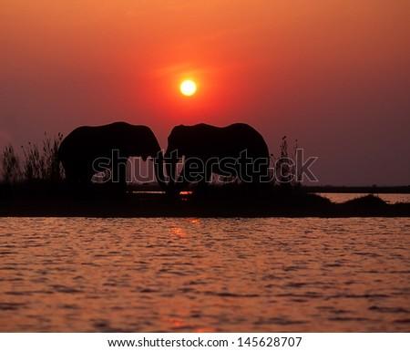 Two elephants at sunset, Lake Kariba, Zimbabwe - stock photo