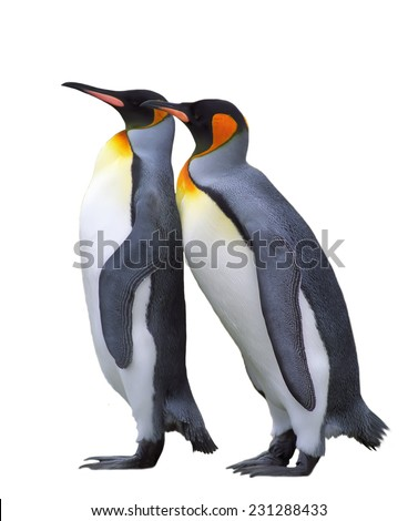 Two emperor penguin isolated over white  - stock photo