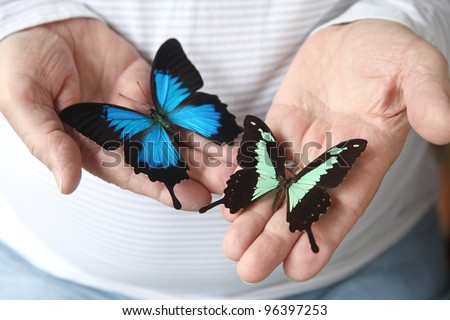two exotic swallowtail butterflies on a man's hands - stock photo