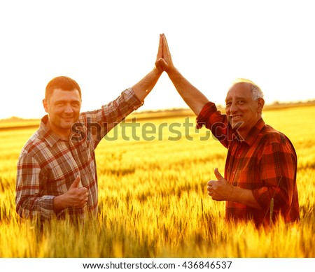 Two farmer standing in a wheat field, they giving a thumbs up. - stock photo