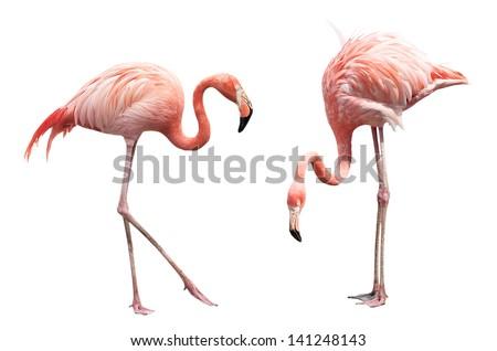 Two flamingo isolated on white background - stock photo