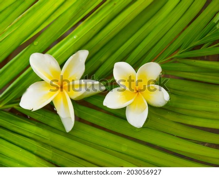 Two frangipani and palm leaf  - stock photo