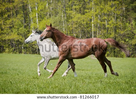 two free horses in summer - stock photo