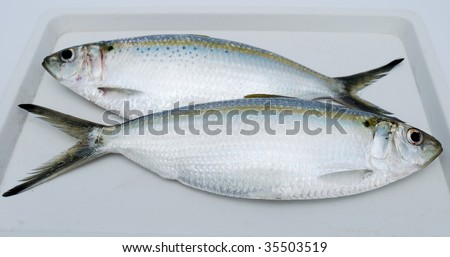 Two fresh fishes on a white support - stock photo