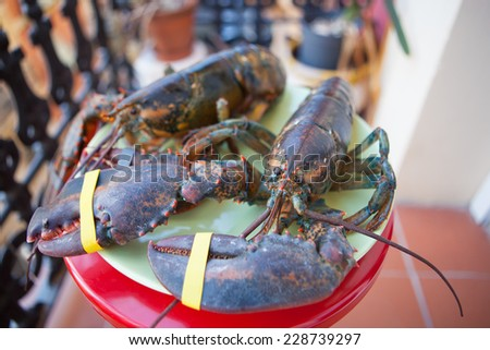 Two fresh lobster on the plate before being cooked - stock photo
