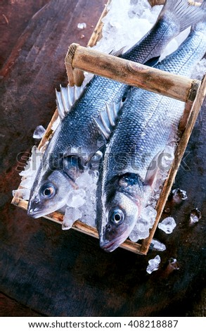 Two fresh Loup de mer fish on ice, also known as the Mediterranean sea bass or sea dace, fresh from the catch in a rustic basket viewed from above - stock photo