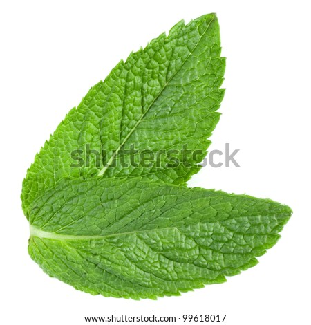 Two fresh mint leaves isolated on white background. Studio macro - stock photo