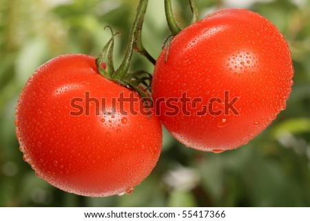 Two fresh red tomatoes - stock photo