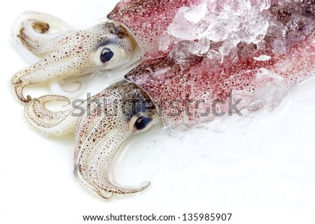 Two fresh squid isolated on white background - stock photo