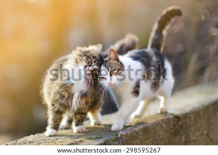 Two friendly cats on spring  - stock photo