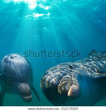 two funny dolphins underwater - stock photo