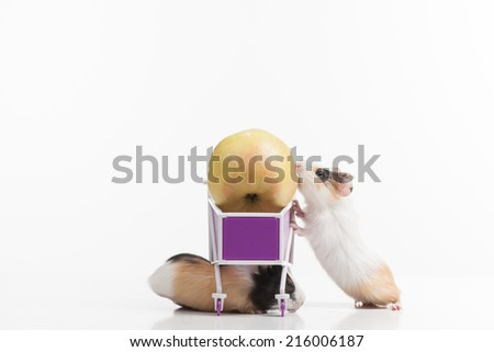 two funny hamsters with shopping cart. two rodents and cart having apple - stock photo
