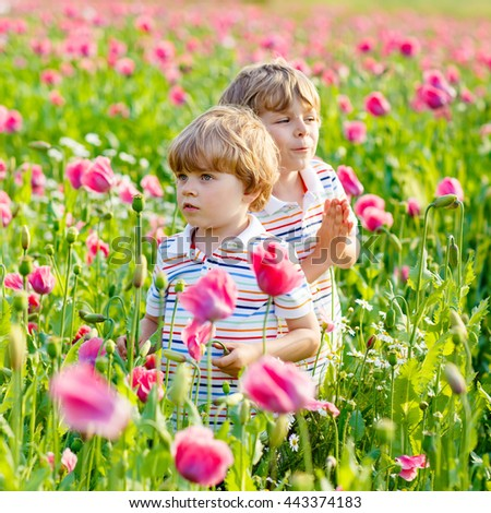 Two funny little sibling boys, kids and friends in blooming poppy field with pink flowers. Active leisure with kids in summer, on sunny warm day, outdoors. - stock photo